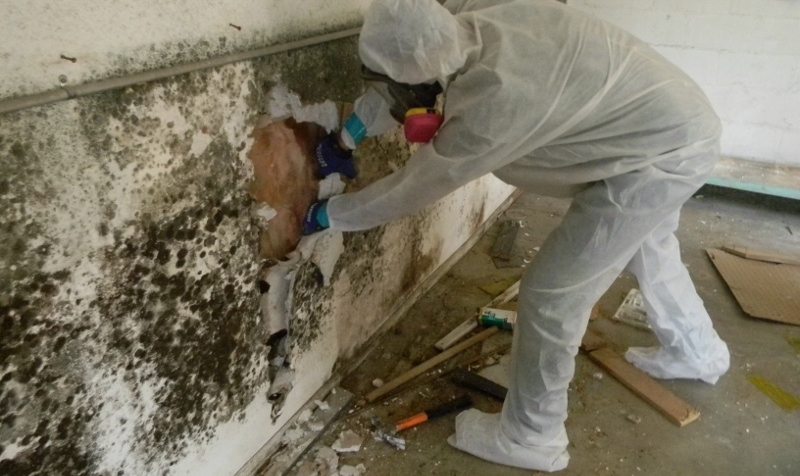 Mold-Removal-Remediation-Kahului-Maui-2