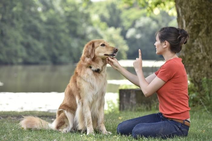 dog minding