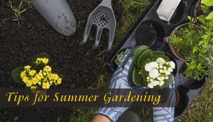 summer-gardening-keep-your-plants-alive
